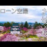 【ドローン空撮】日本のお城 × 桜(オンラインお花見)Castle × Cherryblossom