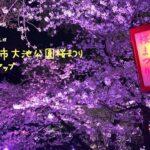 愛知映えスポット✨東海市大池公園桜まつりライトアップ【フォトジェニック】【ライトアップ】【絵になる風景】