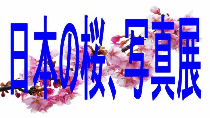 日本の桜、写真展/こんな風景に出逢えたらもう死んでもいいと思う.16Japanese cherry blossoms, photo exhibition
