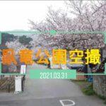 臥竜公園 2021 桜 ドローン