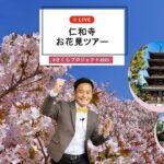 【仁和寺】お花見オンラインツアー #さくらプロジェクト2021 ⑥