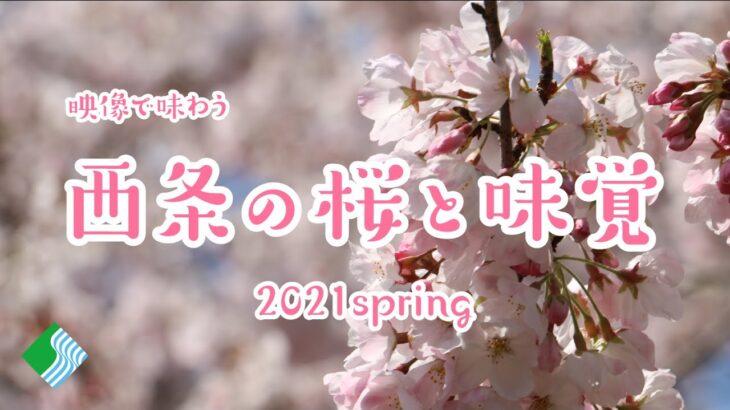 【オンライン花見】映像で味わう 西条の桜と味覚 2021spring