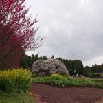 【癒しの自然動画 26分】春の風景 満開の大桜と鶯のさえずり 定点撮影 Big old Cherry blossom in Japan  Большая старая сакура в Японии