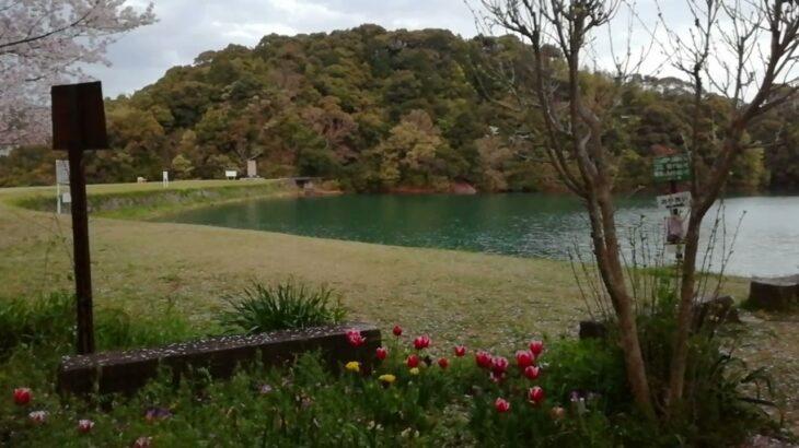 春の風景 桜舞い散る 亀池公園 BGMはウグイスの鳴き声 自然音