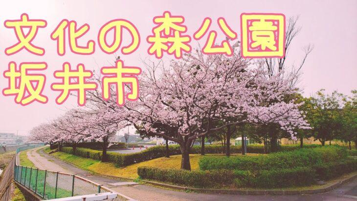 オンライン花見 文化の森公園【坂井市】