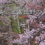 [風景写真スライドショー] 美瑛・上富良野の風景写真 桜