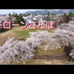 ドローンさんぽ~秋田に桜前線到来~