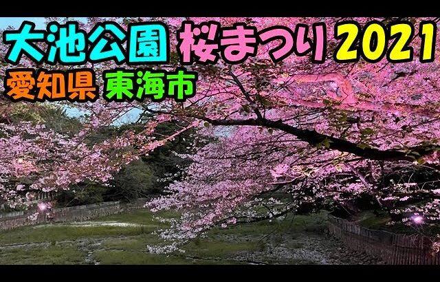 桜が綺麗だ花見をしよう 😁 大池公園 桜まつり🌸 2021 愛知県 東海市
