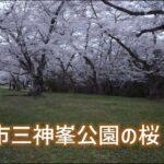 [4K] 仙台市三神峯公園の桜-仙台宮城の美しい風景