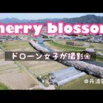 【ドローン撮影】【桜風景】丹波篠山市の桜風景🌸を撮影してみました!