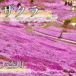 北海道「ひがしもこと芝桜公園」日本の絶景ドローン空撮【癒し】Drone beauty Japan sakura Relaxation
