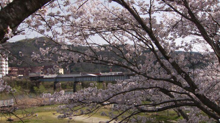 みまさか桜便り2018-1(吉井川橋梁)